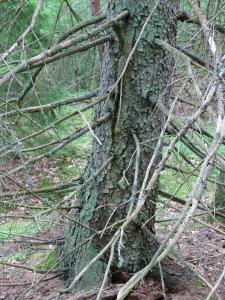 NYA KAMERAN i skogen, svamp o hundar 009